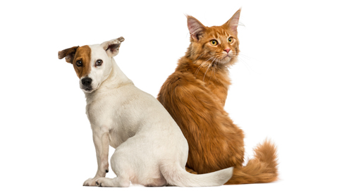 Magenbeschwerden bei Hunden und Katzen