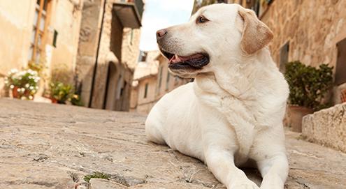 Met uw hond op vakantie: voorkom ongewenste souvenirs