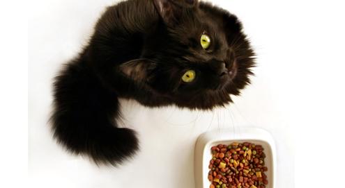 Nahrung und Fellpflege bei allergischen Hunden und Katzen