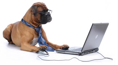 Online dierenapotheek groot succes