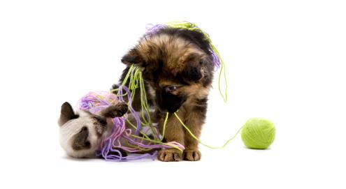 Spielzeug für Hund, Katze und Pferd