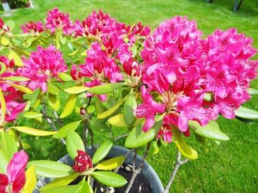 Blumen auf Liegewiese - Haus OF