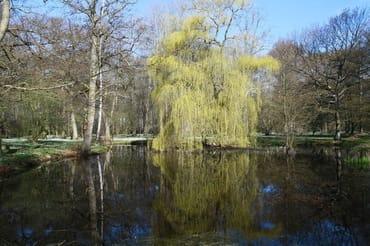 Der nahe gelegene Park lädt zu erholsamen Spaziergängen ein