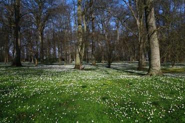 Die Ortsteile Breege und Juliusruh werden durch den Park verbunden.