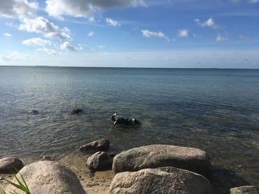 Hund Rudi beim Baden am Südstrand des Ostseebades Göhren