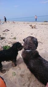 Ostsee...auch ein Hundeparadies