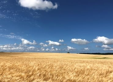 Felder Umgebung