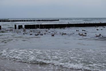 Möwen und Enten warten auf die Spaziergänger