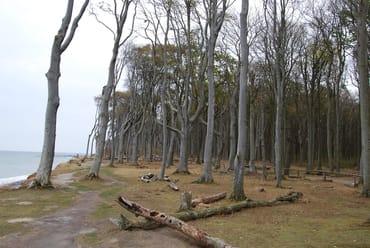 Blick in den herbstlichen Gespensterwald