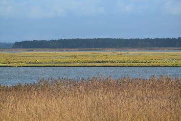 Vogelschutzinsel Kirr