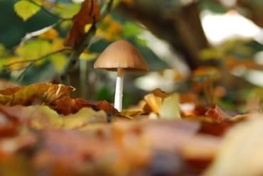 Pilz im Darßwald