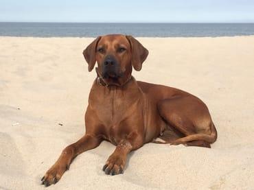 .....relaxen am Strand... :). Ihnen einen wundervollen Urlaub!