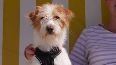 Ihr Hund darf Sie gerne begleiten - sprechen Sie uns an!