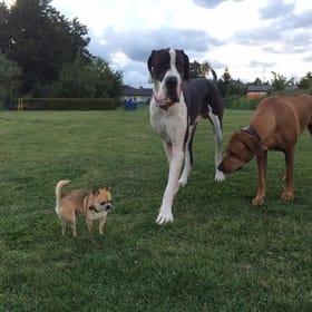 eingezäunte Hundespielwiese