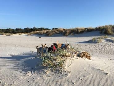 Toben am Strand