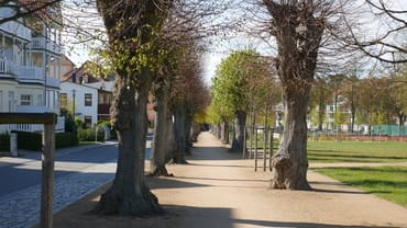 Der Lindenpark.