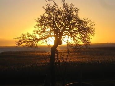 Die Sonne geht auf,über den Saaler Bodden. Gesehen von der Terrasse aus