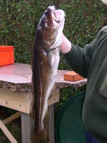Wir lieben nur lokalen frischen Fisch:) z. B. Dorsch  ohne Antibiotika