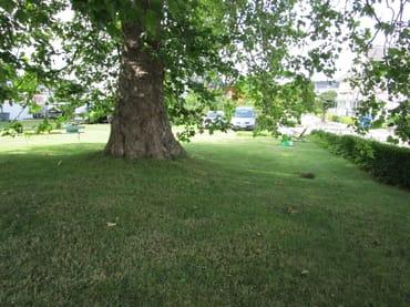Park mit Platane