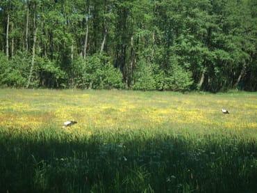 Im Naturschutzgebiet Gothensee