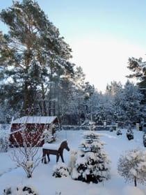 Im Winter der Blick zum Wald