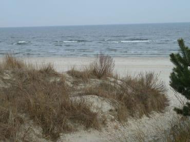 Strand mit Dünen
