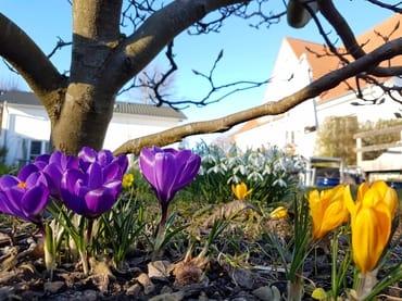 Gartenansicht der Ostseevilla