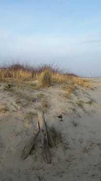 Dünen am Ostseestrand