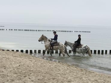 beeindruckender Strandritt an der Ostsee