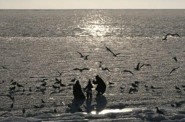 die zugefrorene Ostsee im Hafen von Sassnitz