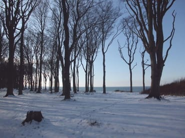 Gespensterwald im Winter