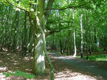 Radweg, Wald Zempim