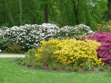 In Graal-Müritz finden Sie einen der größten Rhododendronparks in Norddeutschland.