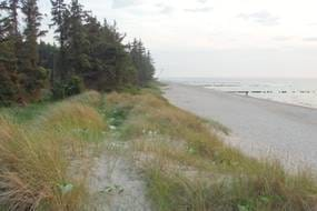 endlos weißer Sand, Wald, Dünen...
