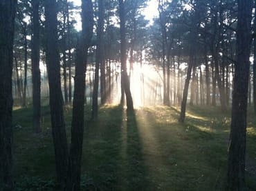 Wald am Strand Breege-Juliusruh