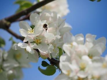Von unseren Bienen gibt es leckeren Honig