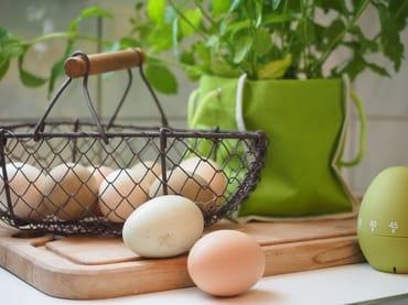 Eier gibt es frisch vom Hof
