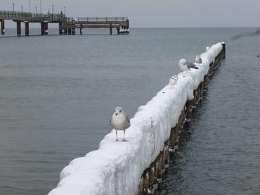 Zingst im Winter