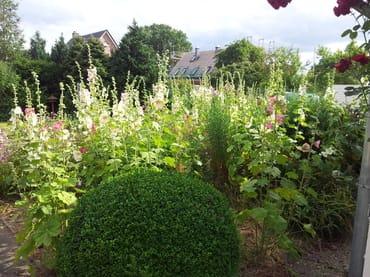 Kleiner Bauerngarten neben der Terrasse