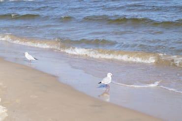 Feiner Sandstrand auf Usedom