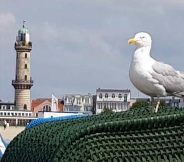 Blick auf den Leuchtturm in Wrnemünde, die Möwe wacht über das Treiben am Strand