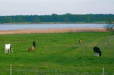 der Bodden- die stille Seite der Ostsee