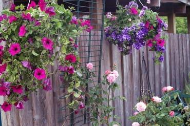 Blumen überall
