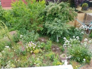 Blick in unseren Garten.