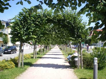 Strandstraße in Baabe