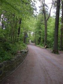 Waldweg für Spaziergänge oder Fahrradtouren direkt hinter dem Strandbereich