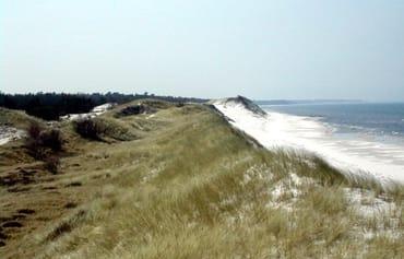Sand Dünen am Strand von Zingst