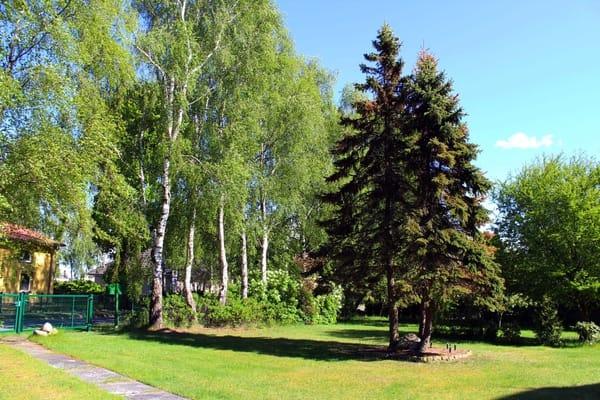 Ein Blick in den Garten