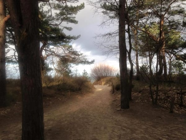 Dünenwald