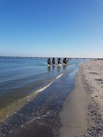 von Nov. bis März ist das reiten am Strand möglich, Reiterhof 3 Minuten von unserer Wohnung entfernt